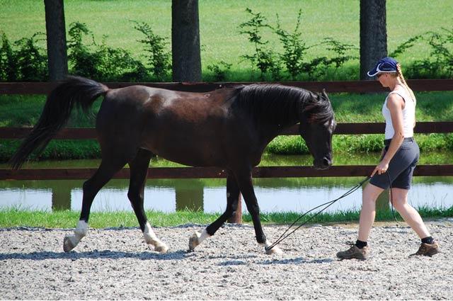 CoWrinna - Natural-Horsemanship